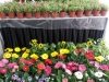 Pot-A-Plant Flowers