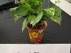 Pot-A-Plant
